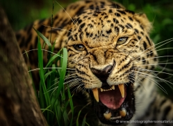 richard-langford-5565-copyright-photographers-on-safari-com