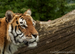 robbie-jerrom-5467-copyright-photographers-on-safari-com