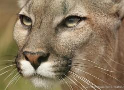 sarah-kate-tunstall-5475-copyright-photographers-on-safari-com