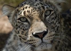 sharon-dowson-5605-copyright-photographers-on-safari-com