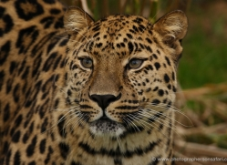 tony-booker-5484-copyright-photographers-on-safari-com
