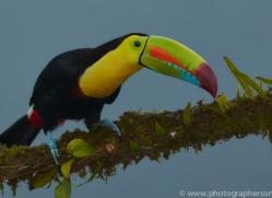 keel-billed-toucan-copyright-photographers-on-safari-com-6646