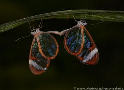 Butterfly 2014 -4copyright-photographers-on-safari-com