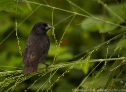 Finch 2015 -2copyright-photographers-on-safari-com