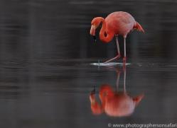 Flamingo 2015 -11copyright-photographers-on-safari-com