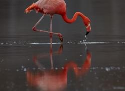 Flamingo 2015 -12copyright-photographers-on-safari-com
