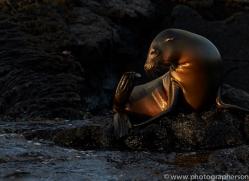 Sealion 2015 -7copyright-photographers-on-safari-com