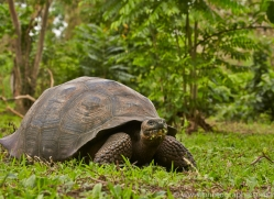 Tortoise 2015 -2copyright-photographers-on-safari-com