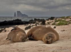 sealion-1855-galapagos-copyright-photographers-on-safari-com
