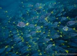 snorkelling-1715-galapagos-copyright-photographers-on-safari-com
