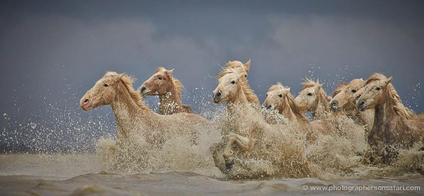 grey-heron-1046-camargue-copyright-photographers-on-safari-com-1