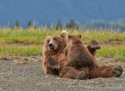 brown-bear-alaska-1316-copyright-photographers-on-safari-com