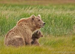 brown-bear-alaska-1323-copyright-photographers-on-safari-com