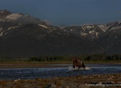 brown-bear-alaska-1363-copyright-photographers-on-safari-com