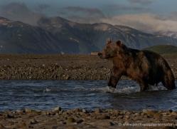brown-bear-alaska-1365-copyright-photographers-on-safari-com