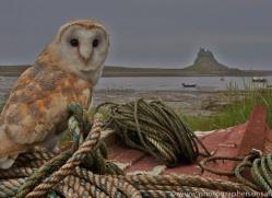 Barn-Owl-copyright-photographers-on-safari-com-6020