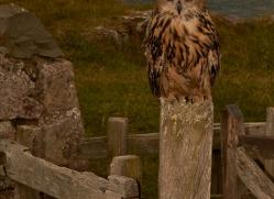 Eagle-Owl-copyright-photographers-on-safari-com-6039