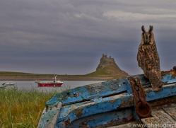 Long-Eared-Owl-copyright-photographers-on-safari-com-6066