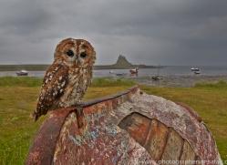 Tawny-Owl-copyright-photographers-on-safari-com-6091