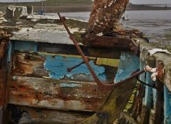 Tawny-Owl-copyright-photographers-on-safari-com-6104