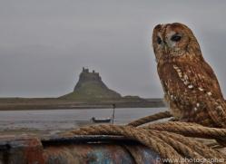 Tawny-Owl-copyright-photographers-on-safari-com-6108