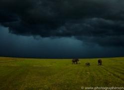 Elephant 2014 -31copyright-photographers-on-safari-com