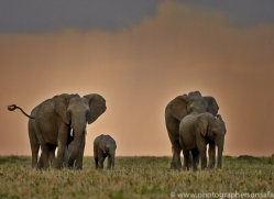 Elephant 2014 -32copyright-photographers-on-safari-com