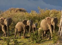Elephant 2014 -37copyright-photographers-on-safari-com