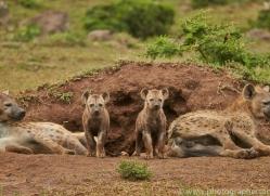 Hyena 2014-2copyright-photographers-on-safari-com