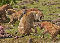 Hyena 2014-5copyright-photographers-on-safari-com