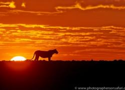 Sunrise 2014-2copyright-photographers-on-safari-com