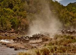 Wildebeest Crossing 2014-1copyright-photographers-on-safari-com