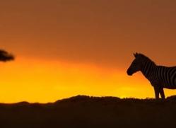 sunrise-masai-mara-1653-copyright-photographers-on-safari-com