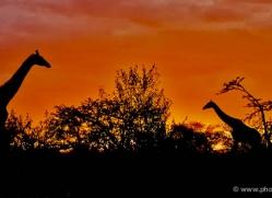 sunset-masai-mara-1657-copyright-photographers-on-safari-com