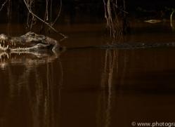 caiman-copyright-photographers-on-safari-com-7148