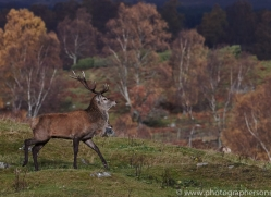 Red Deer 2014-5copyright-photographers-on-safari-com