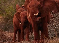 Elephant-copyright-photographers-on-safari-com-6262