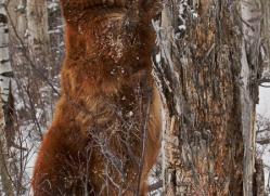 brown-bear-moab-2077-copyright-photographers-on-safari-com
