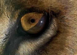 sumatran-tiger-whf-2486-copyright-photographers-on-safari-com