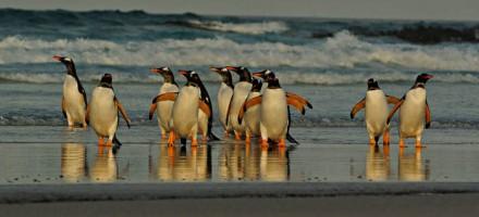 Falkland Islands Photography Recce Tour December 2017 / January 2018