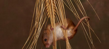 Small Mammals, Reptiles & Insects