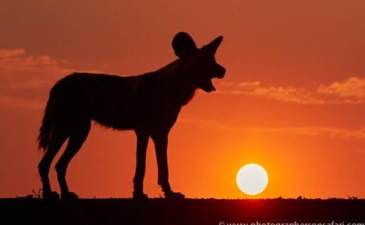 South Africa Recce 2015 – Safari Report  – October 2015