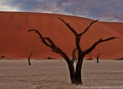 deadvlei-copyright-photographers-on-safari-com-6743