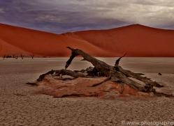 deadvlei-copyright-photographers-on-safari-com-6747