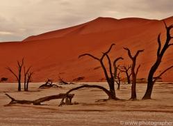 deadvlei-copyright-photographers-on-safari-com-6749