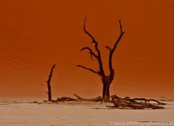 deadvlei-copyright-photographers-on-safari-com-6751