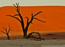 deadvlei-copyright-photographers-on-safari-com-6757