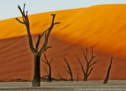 deadvlei-copyright-photographers-on-safari-com-6758