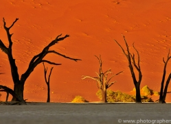 deadvlei-copyright-photographers-on-safari-com-6759