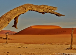 deadvlei-copyright-photographers-on-safari-com-6765